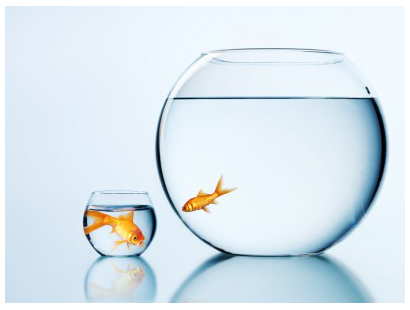 outgrown the fishtank